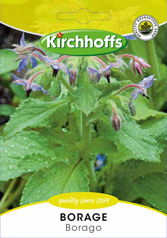 Kirchhoffs Borago Officinalis