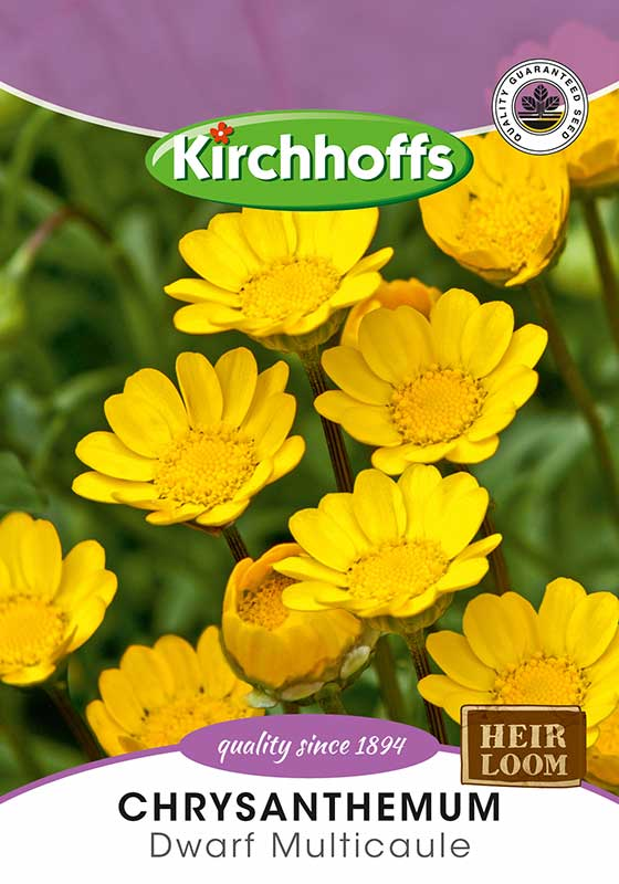 Kirchhoffs Chrysanthemum Multicaule